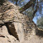 muro a secco azienda agricola biologica Liguria