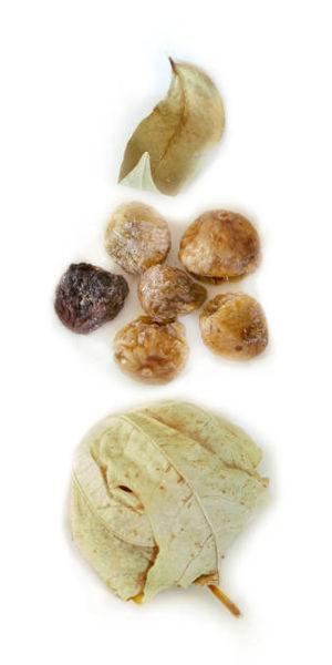 Pan de Fighe di Aurigo biologici