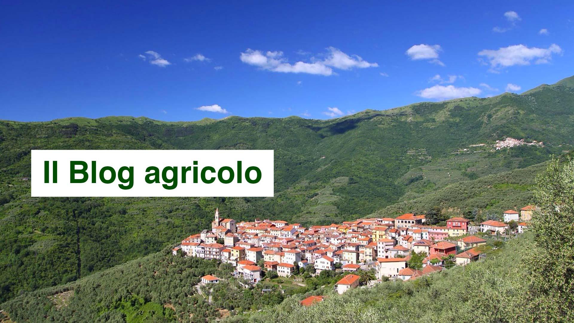 Aurigo e il blog