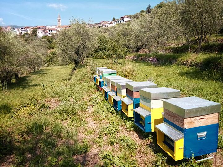 Sono arrivati i api!