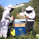 Raccolta miele biologico Tera de Prie a Candeasco, Borgomaro