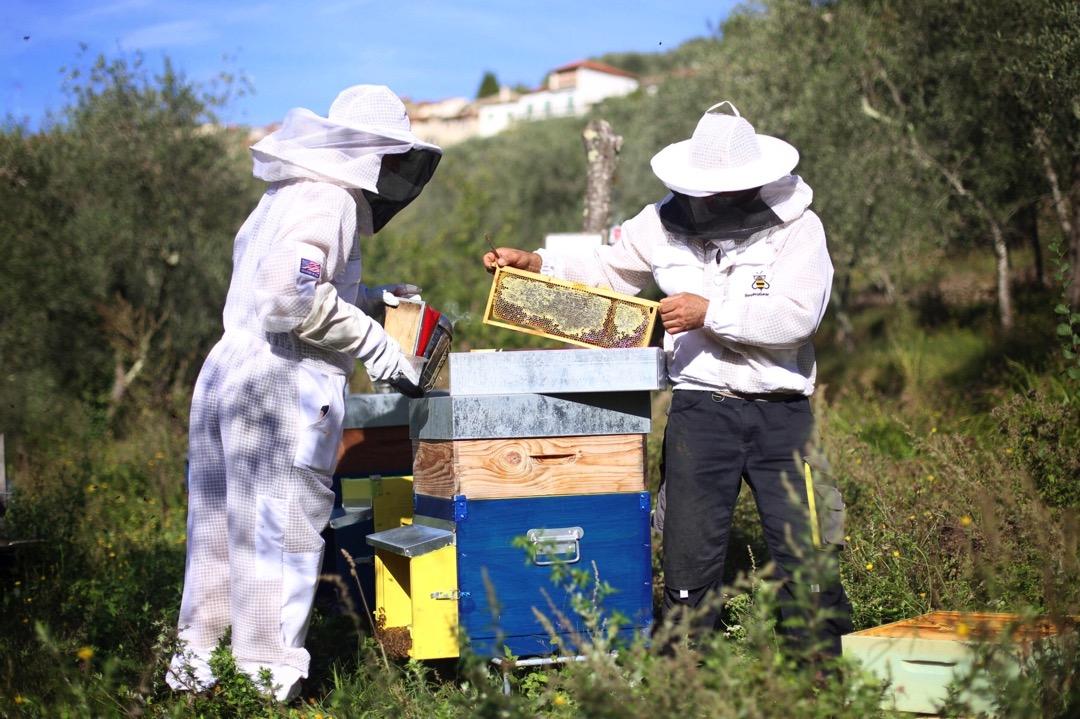Il Miele Bio frutto della collaborazione